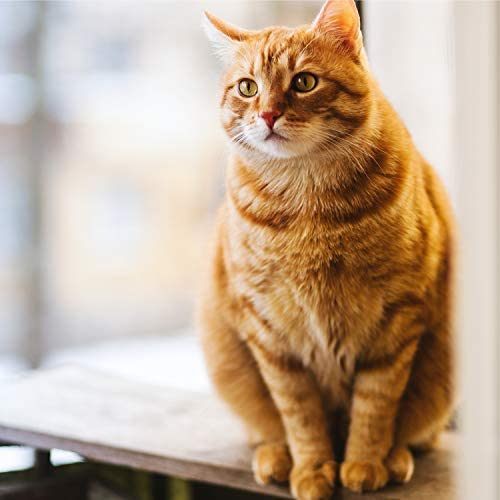 Cats Music Zone, Music for Cats Project & Music for Relaxing Cats