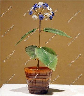 Seltene Verbena Hybrida Seed Perennial Bonsai Blumensamen Indoor Balkonpflanzen Blumensamen für Home Garten Zier 100 PC-6