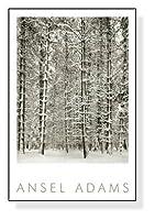 ポスター アンセル アダムス Pine Forest in Snow (エンボスマーク入)