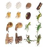 STOBOK 4 Set di 16Pcs Animali Figurine Pregare Mantis Lumache Ciclo di Vita di Plastica Re...