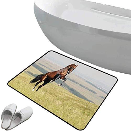 Tapis de salle de bain antidérapant Les chevaux bain doux Baie Akhal Teke,étalon de cheval,élevage sur le terrain,noble mammifère extérieur,pastorale,vert brun Pour douche paillasson chambre salon cui