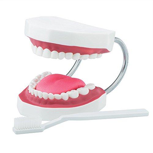 SmileMakers Large Dental Care Model - Dental Hygiene Education