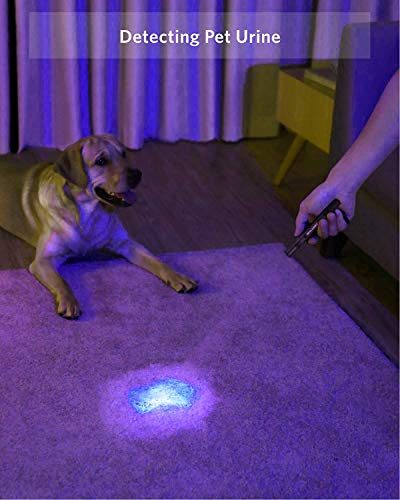 UV Black Light Flashlight, 2 Pack LED UV Torch Mini Blacklight Ultraviolet Pen Lights for Leak and Hotel Inspection - Pet Urine, Bed Bug, Scorpion, Stain, and Dye Detector 5