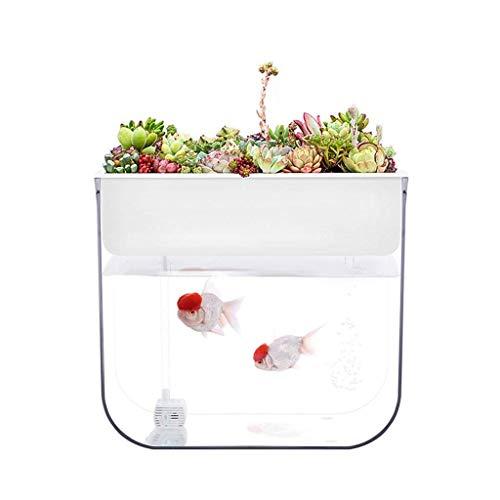 MUMUCW Mini Aquaponic Ökosystem Aquarium wachsen Pflanzen Samen-Keimgerät Quecke Sprouts hydroponischen Reinigung des Ökosystems Wasser-Garten-Fisch-Behälter