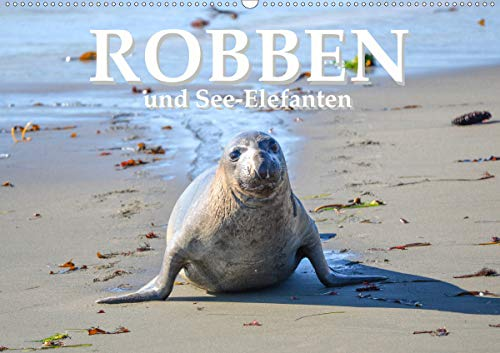 Robben und See-Elefanten (Wandkalender 2021 DIN A2 quer)