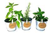 Green Up! Kit de Plantas–Kit completo de Hierbas Interior para Huerto Urbano–Cultiva tus propias Plantas y Hierbas Aromáticas–Kit de Cultivo Semillas 100% naturales (Menta, Perejil, Romero)