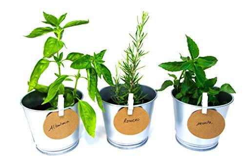 Green Up! Kit de Plantas–Kit completo de Hierbas Interior para Huerto Urbano–Cultiva tus propias Plantas y Hierbas Aromáticas–Kit de Cultivo Semillas 100% naturales (Menta, Albahaca, Romero)