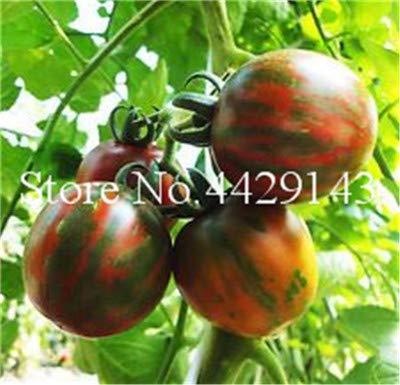 Pinkdose Leche Tomate Rojo Bonsai, Tomate Cherry Planta orgánica ...