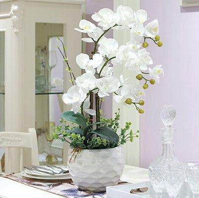 Fleur exotique Orchidée Graines Cattleya Multicolor Papillon Orchidee Bonsai Monoflord Mini jardin plante facile à cultiver 200 pcs/sac 15