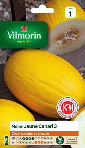 Vilmorin - Sachet graines melon jaune canari