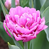 Wedding Gift Double Early Tulip