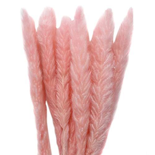 Mengdie 15 Stück natürlich getrocknetes Pampasgras Schilfrohrblumenstrauß für Zuhause, Hochzeit, Blumendekoration 60–80 cm