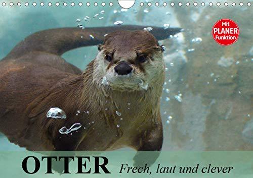 Otter. Frech, laut und clever (Wandkalender 2021 DIN A4 quer)