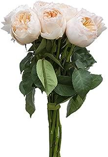 Best david austin juliet peach garden rose Reviews
