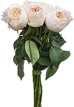 Best david austin cut roses Reviews