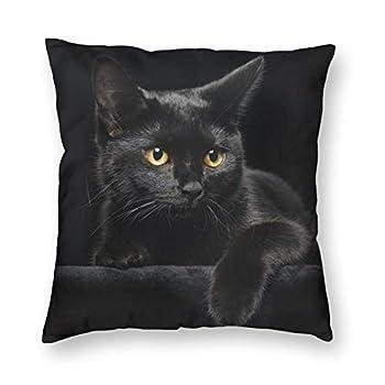 Best black cat cute Reviews