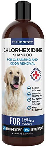 PetHonesty Antibacterial & Antifungal Chlorhexidine Shampoo 16 oz. w/Ketoconazole & Aloe for Dogs & Cats, Treats Itching, Hot Spots, Ringworm, Pyoderma & Allergies, Anti-Odor Dog Shampoo