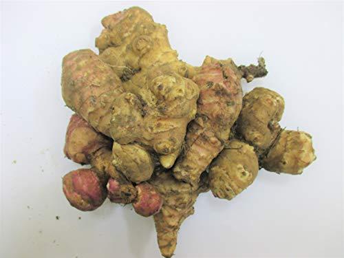 生菊芋(2kg食用、無農薬)