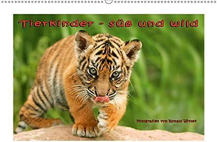 Tierkinder - süß und wild (Wandkalender 2020 DIN A2 quer): Wandkalender mit zwölf großformatigen Abbildungen junger Wildtiere. (Monatskalender, 14 Seiten )