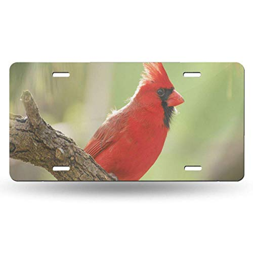 BRIGHT JUNAY Cool Metal License Plate,Adult Black Branch Red Male Northern Cardinal Against Green Car Front License Plate 6 Inch X 12 Inch