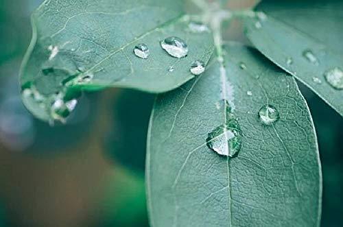 nobrand DIY Steuern Dekor Digitalen Leinwand Ölgemälde Von Nummer Kits - Pflanze Akebia Blatt Grün Regen Tropfen