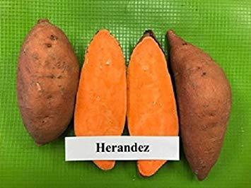 Petsdelite® 10 Süßkartoffeln Hernandez, violetter Stiel mit hellrotem und orangefarbenem Fleisch