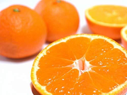低農薬 訳あり 和歌山産 ネーブル オレンジ 約 10kg ご家庭用 サイズ混合 バラ詰め 産地直送