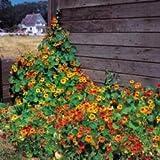 Nasturtium - Tall Climbing Mixture - 25 Seeds