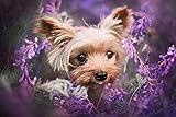 Shenglex Dipingere con i Numeri Pittura a Olio Digitale Kit di Pittura su Tela murale opere d'Arte Decorazioni Regalo(40X50 cm) Senza Cornice--Simpatici Animali del Cane Yorkshire Terrier