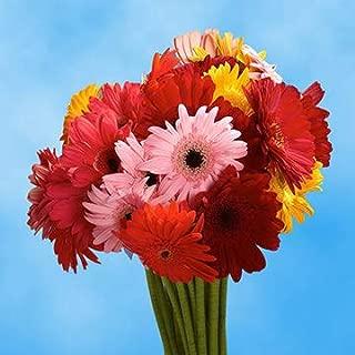 gerbera daisy delivery