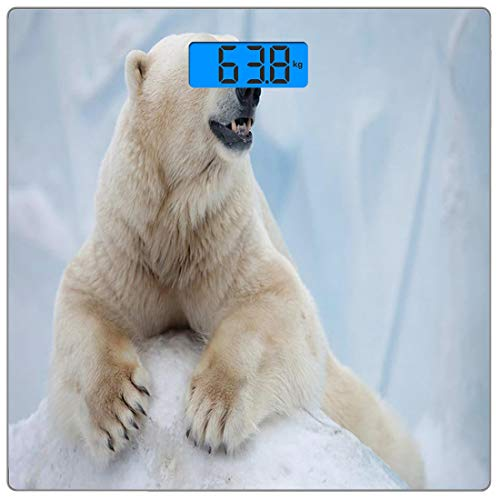 Escala digital de peso corporal de precisión Square zoo Báscula de baño de vidrio templado ultra delgado Mediciones de peso precisas,Retrato de un gran oso polar blanco sobre garras de hielo Antártida
