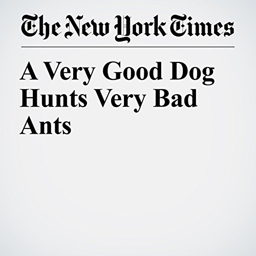 A Very Good Dog Hunts Very Bad Ants copertina