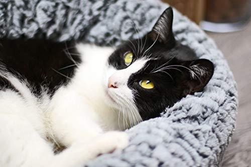 Aime - Cesta de pelo redondo para gato/perro pequeño, suave, suave, suave, color gris, talla S, diámetro 45 cm