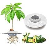 TOLIANCLE Ciotola per coltivazione di alberi di avocado, UFO Ciotola per piantare semi di ...