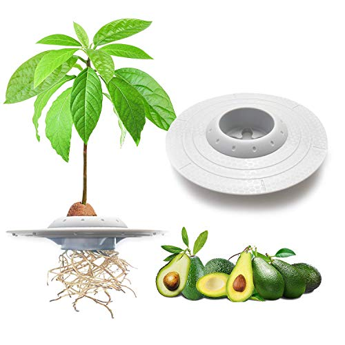 GORNORVA Avocado Tree Growing Bowl, Avocado Planting Seed Germinator Bowl Garden Seed Starter Gift for Women Grow Avocado Plant Indoor Kitchen Garden Seed Starter Gift (Seeds & Plants NOT Included)