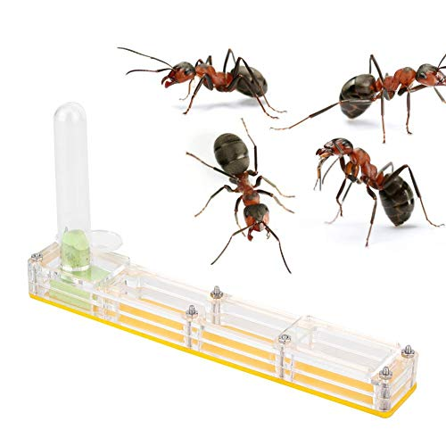 Pssopp Ameisenhaus Acryl Ameisen Zuchthaus Nest Transparent Ameise Fütterung Lebendiges Nest mit Wasserturm Feuchtigkeitsspendend (gelb)