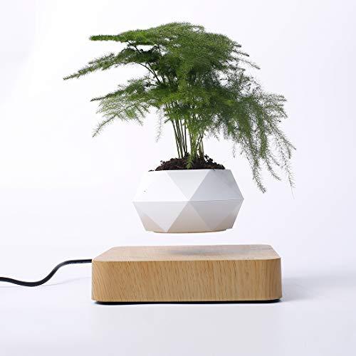 LWKBE Levitating Magnetic Floating Luft Bonsai Pot Magnetschwebebahn Suspension Blumentopf Micro Landschaftsbau für Home Office Dekoration Vatertagsgeschenk,Natural