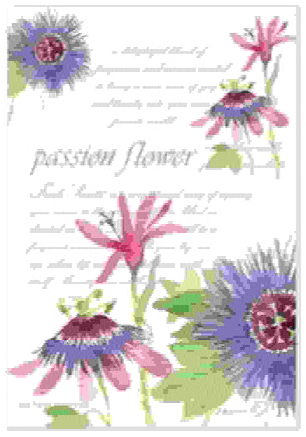 selección larga Fresh Scents Scented Sachets - Passion Flower, Flower, Flower, Lot of 6 by Fresh Scents  mejor vendido
