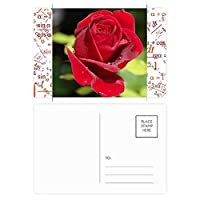 暗赤色のバラの花 公式ポストカードセットサンクスカード郵送側20個