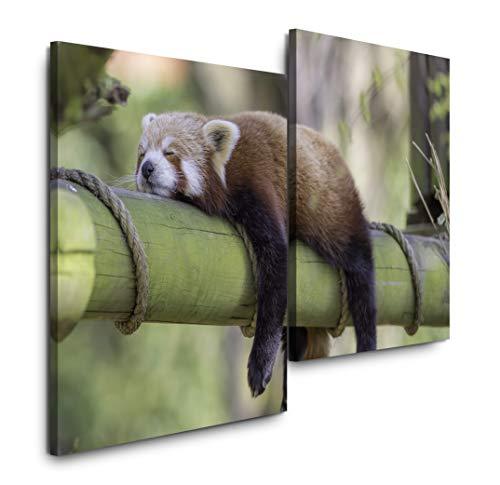 Sinus Art schlafender roter Panda 120x80cm 2 Kunstdrucke je 70x60cm Kunstdruck modern Wandbilder XXL Wanddekoration Design Wand Bild