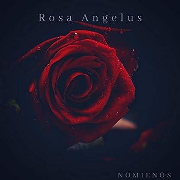 Rosa Angelus