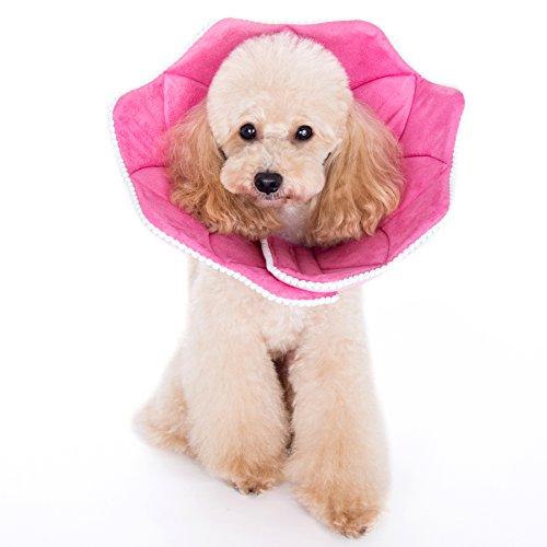 Alfie Pet – Noah Flower Recovery Collar