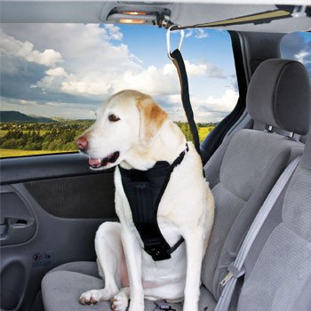 Petco Premium Zipline Dog Seat Belt