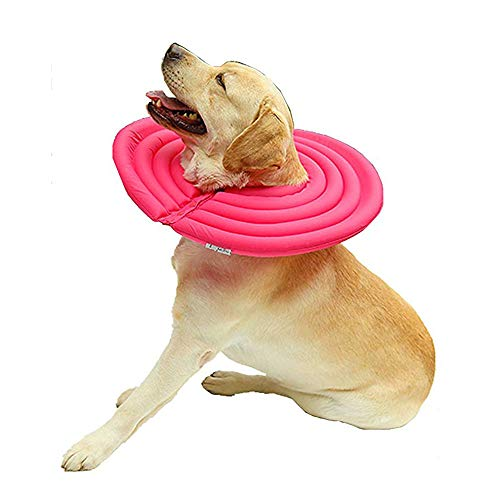 Collar para Mascotas, Protección contra Fugas Premium,...
