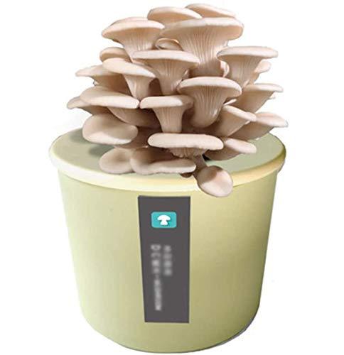 DBXOKK Cultivo de Hongos Kit, Kit Autocultivo Setas, Caja de Cultivo Casero de Setas Ostra, Cultivar Setas en Casa en Solo 15-25 Días, Regalos Originales Niñospink-White Oyster Mushroom
