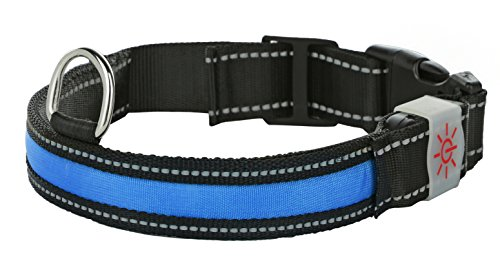 Light Up Rechargeable LED Nylon Dog Collar with 3 Light Settings and Metal Buckle - Includes USB...