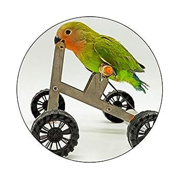 Xzbnwuviei Jouet éducatif pour perroquet - Mini véhicule à quatre roues en métal - Jouet amusant pour oiseaux - Accessoire éducatif interactif pour perruche, calopsitte, conure