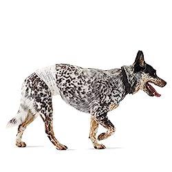 top 10 male wrap dog Amazon Basics Men's Diaper Change, Medium (Waist 18-23.5 inches) – 30 Pieces