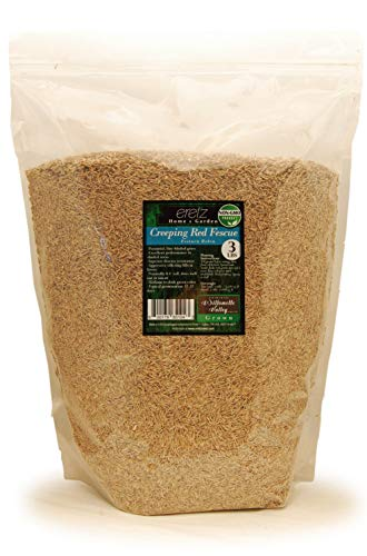 Creeping Red Fescue Seed by Eretz (3lb) - CHOOSE SIZE! Willamette Valley Oregon Grown, No Fillers, No Weed or Other Crop Seeds, Premium Shade Grass Seed.