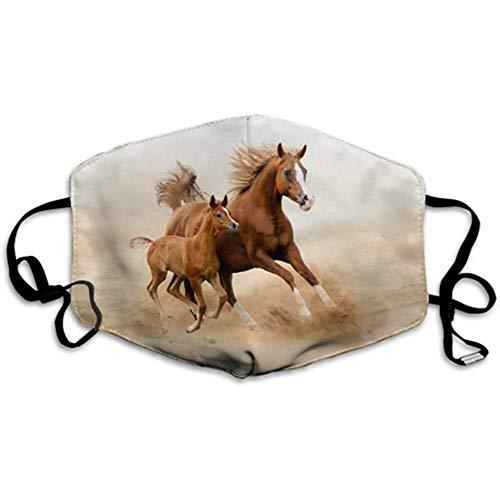 Reinrassiges weißes arabisches Pferd in Wüstenstaubabdeckungen Sportabdeckung Herrenstaubabdeckung
